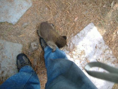 chimney animal removal